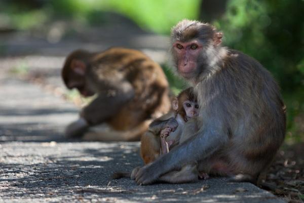 Monkey Mountain, por Jens Schott Knudsen,CC BY-NC 2.0.